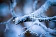 Leinwanddruck Bild - frost on branches
