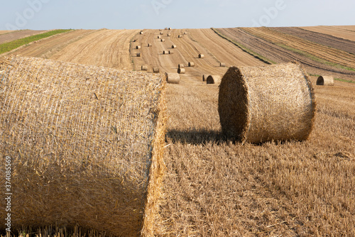 Photo Hay Bale Rows in Meadow