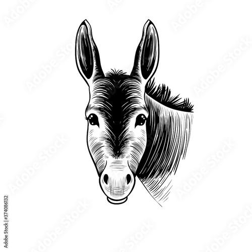 Fotografiet .Donkey head. Hand drawn realistic animal portrait. Vintage vector illustration.