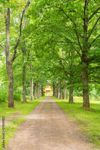 Fotografija Oak tree alley in summer, Ankkapurha Cultural Park, Anjala manor, Kouvola, Finla
