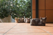 Three Kittens Take An Afternoo...