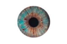 Human Eye Isolated On White