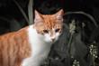 canvas print picture - Katze