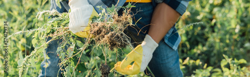 Fototapeta cropped view of farmer weeding field in work gloves, horizontal concept obraz
