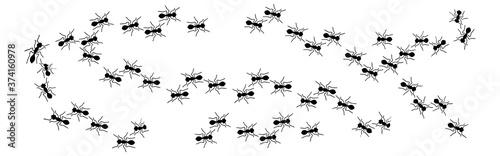 ant crawling set isolated on white background Vector illustration