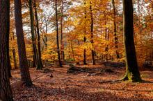 Warm Colours Of Autumn Foliage...
