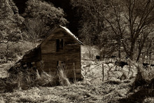 Old Ruined Barn In The Woods