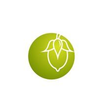 Jojoba Nut In Green Circle Ico...