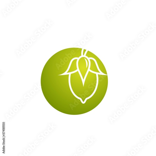 Jojoba nut in green circle icon Canvas Print