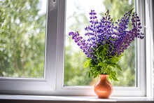 Blue And Purple Lupine Flowers...