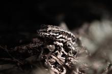 Macro Close Up Of A Lizard In ...