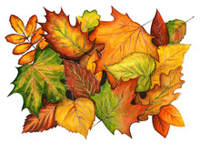 Watercolor Colorful Background Of Autumn Leaves Lying On The Ground. Hand Drawn Pattern Of Different Leaves Isolated On White. Illustration Of Fall Season Leafage Randomly Placed.