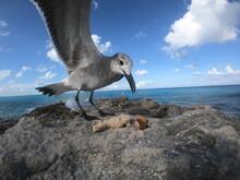 Bird Having Breakfast In A Mor...