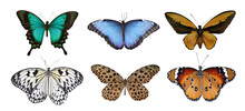 Set Of Beautiful Butterflies On White Background