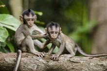 Two Cute Baby Monkey