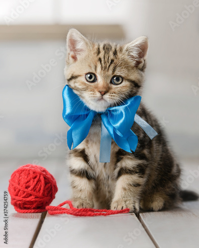 Cute kitten playing with balls of yarn
