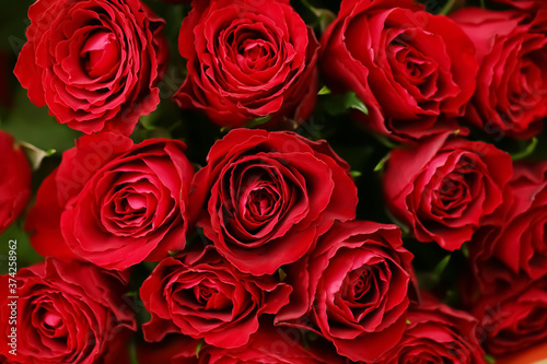 Beautiful red roses as background #374258962