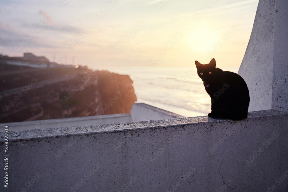 Cute cat sitting on ocean view point promenade.