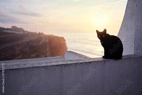 Fotografie, Obraz Cute cat sitting on ocean view point promenade.