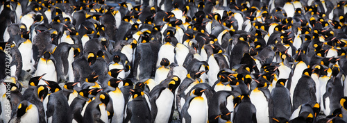Fotografie, Obraz A penguin colony in Antarctica, beautiful view of lost penguins