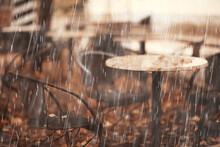 Autumn Rain Background / Bench...