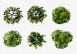 set of watercolor green trees top view isolated For landscape plan and architecture layout