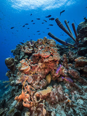 Fototapeta na wymiar Seascape in turquoise water of coral reef in Caribbean Sea / Curacao with fish, coral and Stove-Pipe Sponge