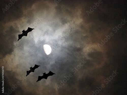 Photographie ハロウィンの夜 月光に照らされるコウモリのシルエット
