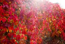 Autumn Leaves. Beautiful Brigh...