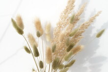 Fluffy Dried Plants Bouquet And Shadows On White Background.Floral Minimal Home Interior Concept.Poster