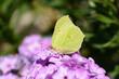 Leinwanddruck Bild Schmetterling 759