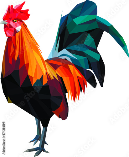 low poly vector rooster color model Fototapete