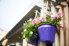 Purple Hanging Planter With Pink Petunia Flowers