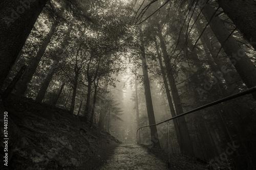 Fotografie, Obraz Dark forest in the fog