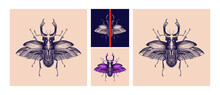 Original Hand-drawn Vintage Stag Beetle On A Dark Blue And A Pastel Backgrounds In Pop Art Style . Botanical Design. EPS 10