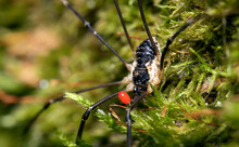 Macro Shot Of Forest Spider Wi...