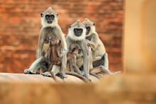 Wildlife Of Sri Lanka. Common ...