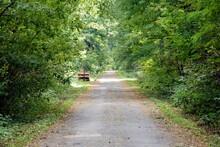 Przepiękna Droga Pośrodku Lasu W Letnie Południe