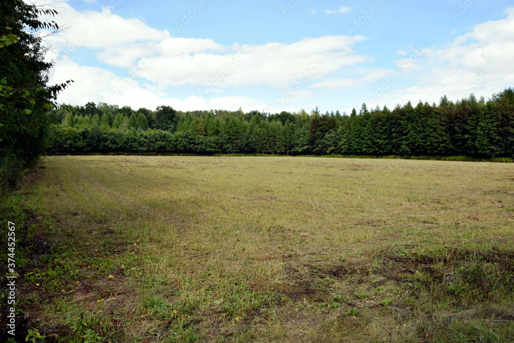 Fototapeta Piękny krajobraz z polem pośrodku lasu
