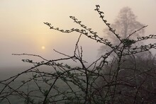 April In The Landscape Park, Spring Dawn, Dew Drops On The Bush