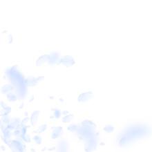 Light Blue Flower Petals Falli...