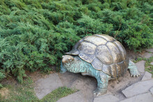 Turtle In The Park