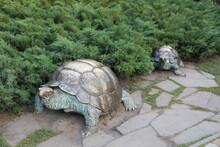 Giant Tortoise In The Park