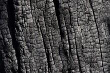 A Charred Tree Trunk Damaged In A Bushfire