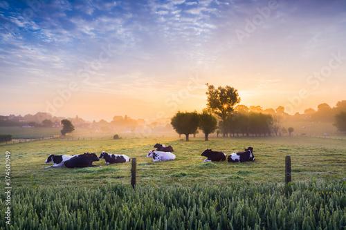 Fotografia Cows at sunrise