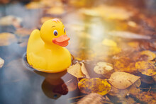 Autumn Duck Toy In Puddle With Leaves