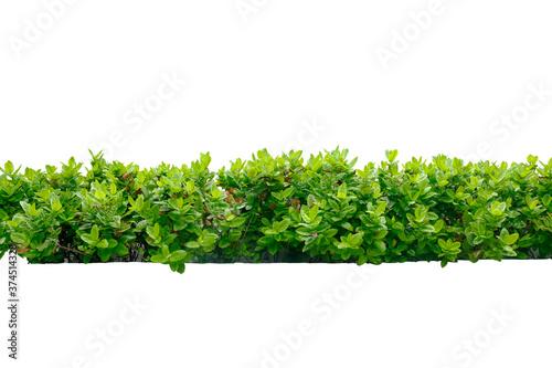 Papel de parede tropical plant bush tree