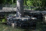 Fototapeta Kamienie - fontanna żaby widok park kamień woda