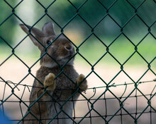 Rabbit Behind A Fence In A Min...