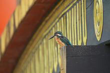 Kingfisher On Bridge